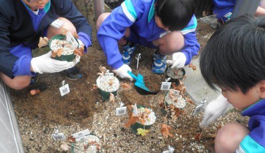 和田小学校の生徒さんと和田公民館にオオキンレイカを定植しました