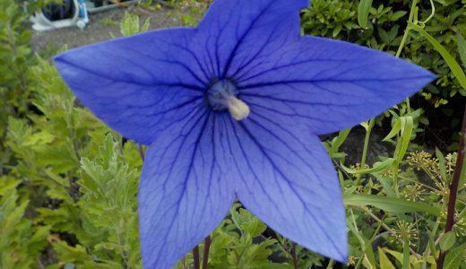 研究所の花だよりと虫よけスプレー作り体験のお知らせ
